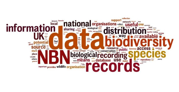 Wordle Strategy What does the NBN mean