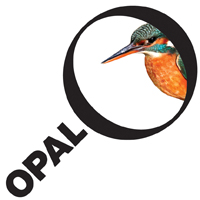 OPAL_Kingfisher