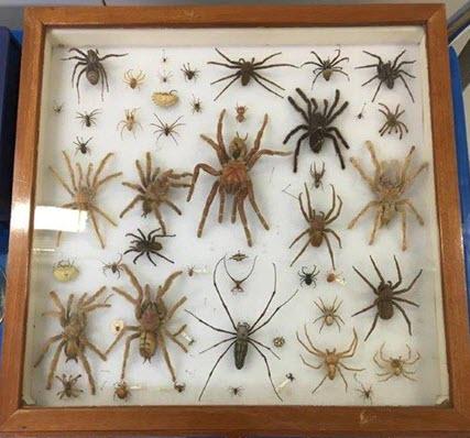 Spiders workshop