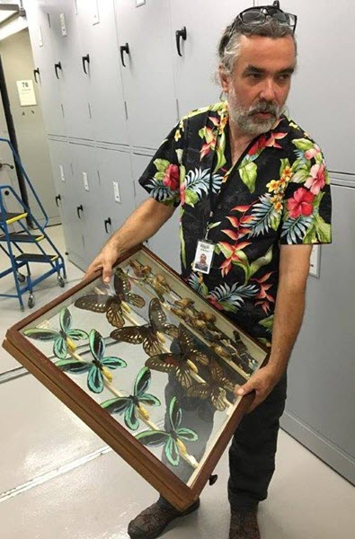 Lepidoptera Geoff's shirts