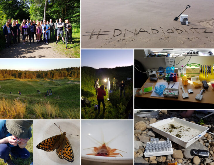 A few photos from the 2019 Ainsdale DNA bioblitz run by NHM and Natural England, where 55 staff and volunteers from 12 organisations collected over 1000 specimens over 3.5 days. NHM sequenced DNA barcodes from 384 specimens in a pop-up lab at the field base. Specimens collected during this bioblitz are being used in the DToL project.