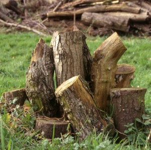 Map your log pile. Log Pyramid c. Colin Hawes